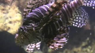 Cooney Wildlife Adventures - Oceans