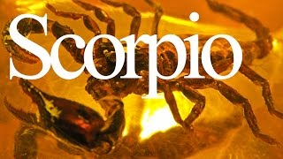 Scorpio Traits And Personality   Zodiac Sign Focus #scorpio   Gregory Scott Astr