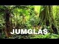 ANIMALES SALVAJES 3 - JUNGLAS - DOCUMENTALES 2019,GRANDES DOCUMENTALES,DOCUMENTALES ESPAÑOL,ANIMALES