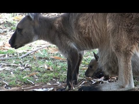 Adelaide. Cleland Wildlife Park