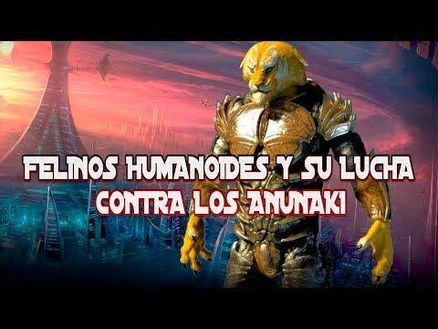felinos-humanoides-y-su-lucha-contra-los-reptilianos