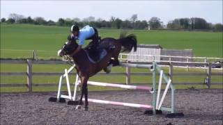 chute a cheval 2016