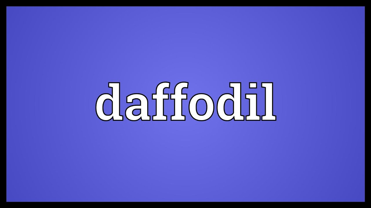 Daffodil Meaning Youtube