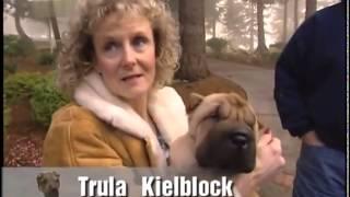 Dog Breed   Shar Pei Ita 1° Parte