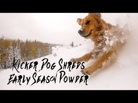 Kicker Dog Shreds Utah's First Snow - GoPro Hero 7