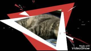Милые котята(кошки,коты). Ня :3