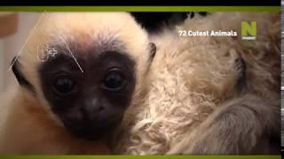 72 самых милых животных - промо передачи на Viasat Nature