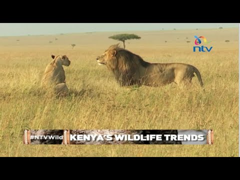 NTV Wild Talk S3 E6 ''Kenya's Wildlife Trends''