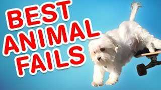 Download Best Animal Fails | Funny Fail Compilation Mp3 and Videos