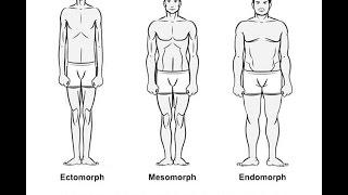 Stoffwechseltypen - EKTOMORPH MESOMORPH ENDOMORPH