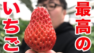 【クレープ屋への道】最高のイチゴ探してみた(いちご狩り)
