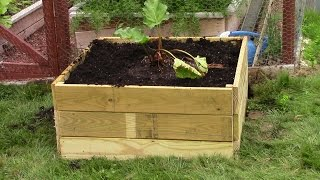 Build A Raised Bed Rhubarb Garden