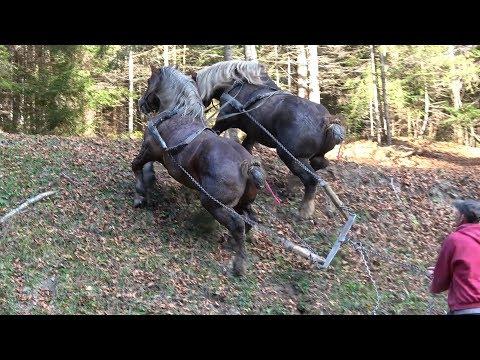 Caii lui Tiberiu