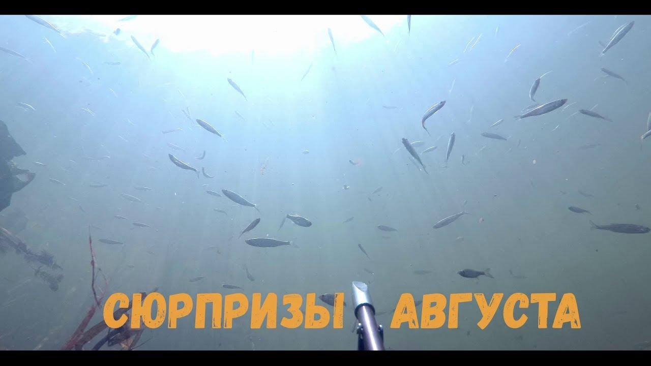 Подводная охота - Сюрпризы августа
