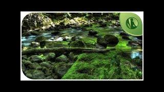 🎶 Música Anti Depressão e Ansiedade, Equilibrio dos Chácras com Sons da Natureza
