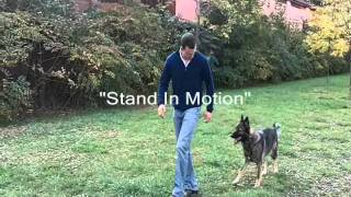 Niagara Dog Training - Off Leash Heeling - Advanced Obedience Training