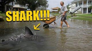 Bull Shark in Front Yard