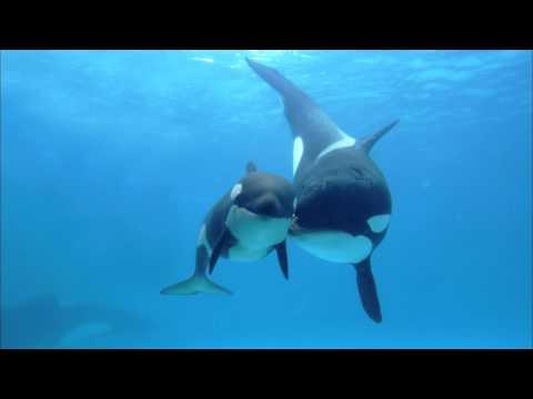 Chant des orques pour vous relaxer