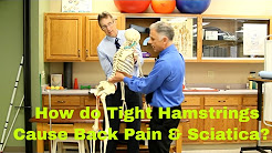 How Do Tight Hamstrings Cause Back Pain & Sciatica? How to Stretch.
