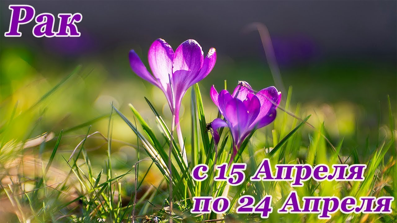 РАК. гороскоп-расклад на 15,16,17,18,19,20 Апреля 2019 года. ЛенорманТаро ОНЛАЙН гадание.