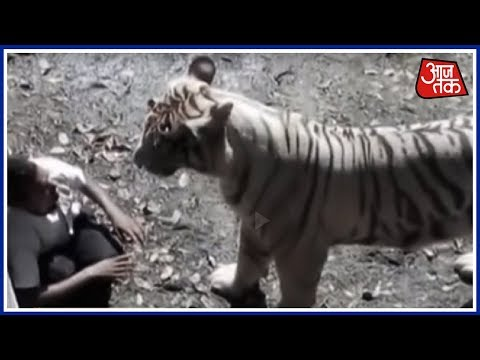 Vardaat - Vardaat: When the white tiger got provoked in 2.25 minutes (Full)