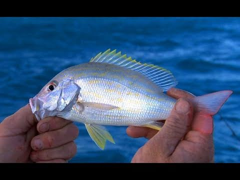 Key Largo Florida Fishing For Patch Reef Snapper Fun For Kids