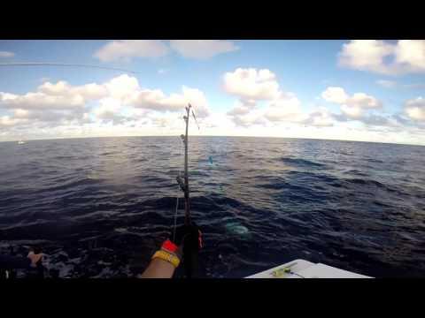 Catching Bluefin Tuna In Sydney, Australia