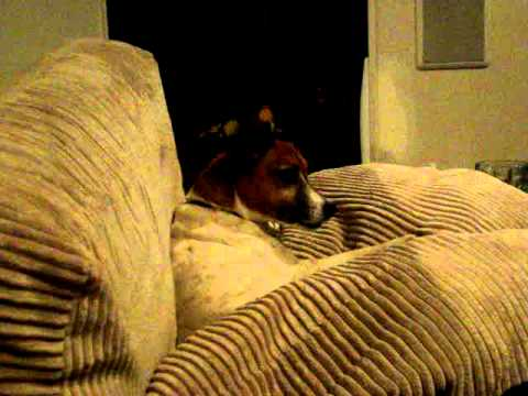 Maggie the Singing Hillbilly Dog