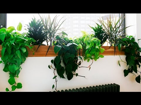 Best indoor plants best indoor plants low light youtube for Best no maintenance plants