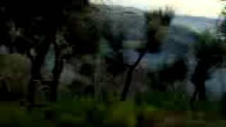 Incendie de Forets Algérie 29/08/2012