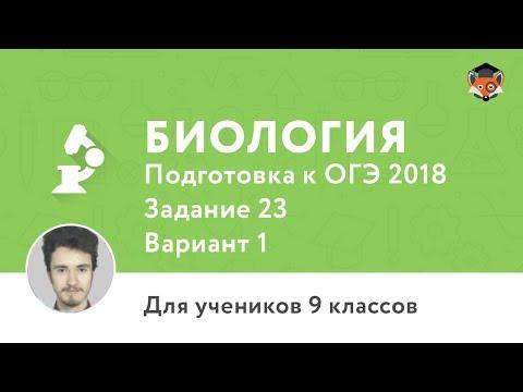 Курсы турецкого языка Москва - Твой Турецкий:изучение