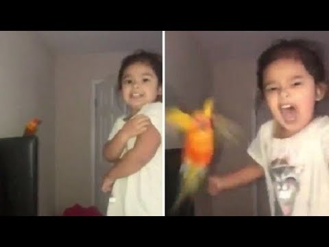 Kobi - Kobi's LOL Moment: A Girl Trained Her Bird To Attack Whomever She Wants!