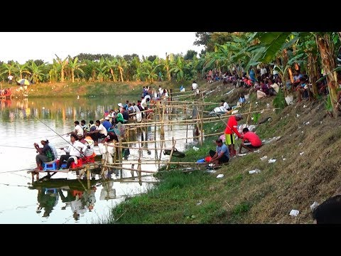 Fishing Competition in Village | Festival Fishing Video By Daily Village Life (Part-03)