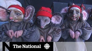The Nutcracker: A backstage look at The National Ballet