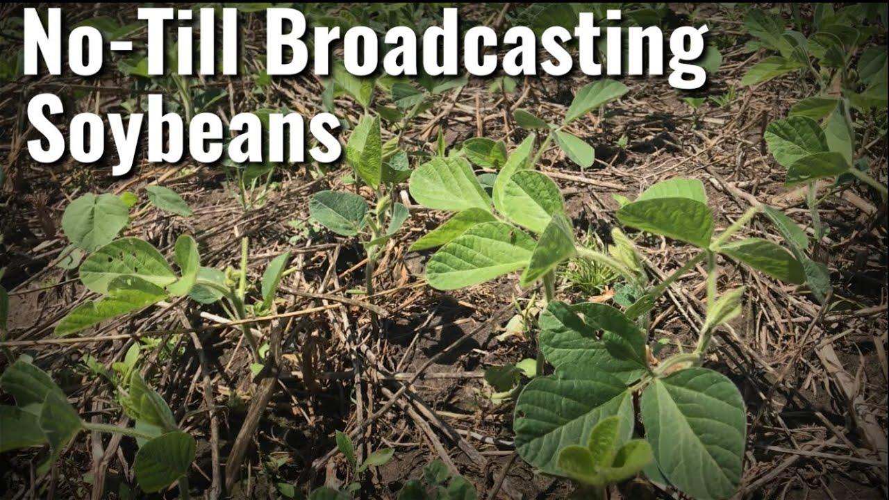 No-Till Broadcasting a Soybean and Corn Food Plot