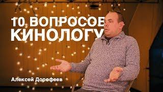 10 вопросов КИНОЛОГУ - Алексей Дорофеев. Глупые собаки. Как выбрать щенка.