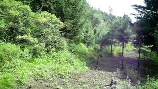 caza conejo con perros d rastro