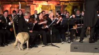 Dog Walks On Stage and Interrupts Orchestra Performance in Turkey