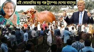 এই কোরবানি ঈদে ঢাকার সবচেয়ে বড় গরু যার ওজন ও মূল্য শুনে আপনার চোখ কপালে উঠবে ! Bangla News 24.