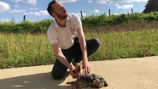 Occuper mon chien pendant le confinement N°1 - Petit tour d'éducation canine pour réfléchir