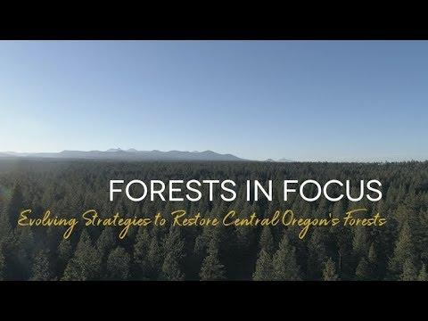 ForestsInFocus Central OR YouTube