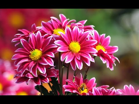 Top 20 Quotes about Flowers