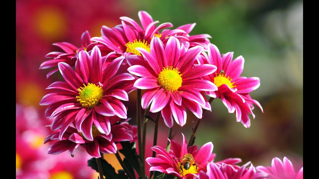 Top 20 quotes about flowers youtube youtube premium izmirmasajfo