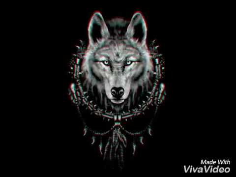 cool wolves