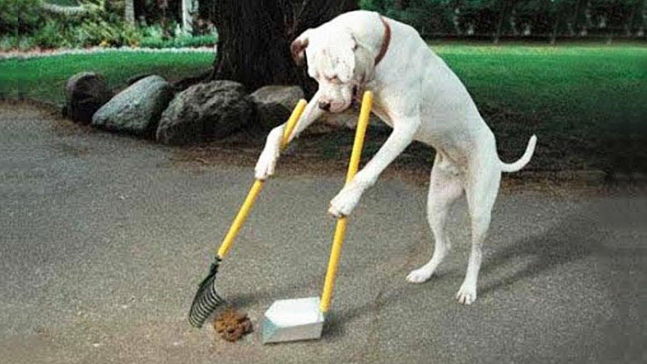 der schlauste hund der welt
