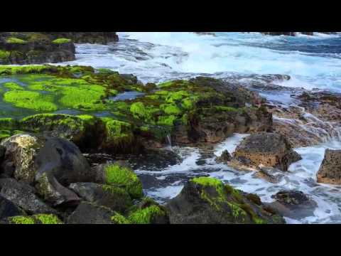 Puna Coastline, Hawaii - Sights and sounds of the ocean waves and tide pools