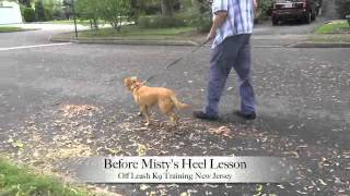 Heel Lesson Before And After Misty The Rescue Pup