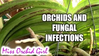 Fungal infections on Orchids - relation to bad media