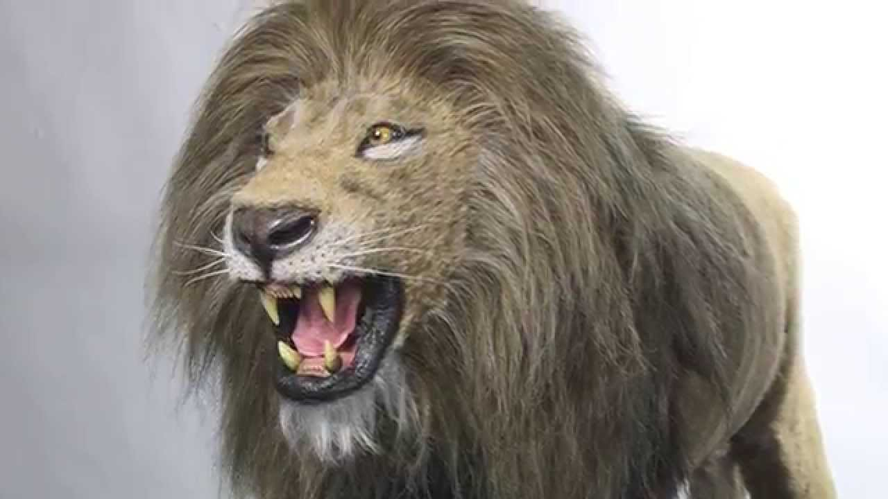 Realistic Lion Puppets We Created for a Stage Show - YouTube - photo#34