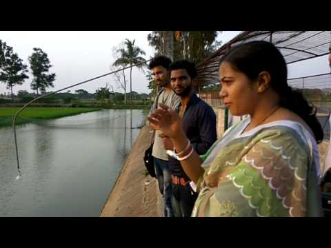 Integrated Rice,fish Farming Systems ,in India